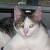 Profile picture of Chazz